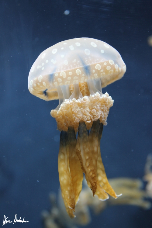 Cool Jelly