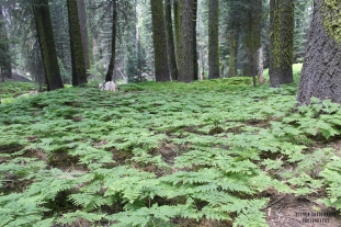 Forest of Ferns